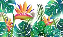 热带植被图片