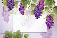 唯美紫色葡萄边框背景图片
