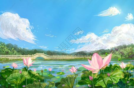 夏日绮想-夏天荷花莲花池塘图片