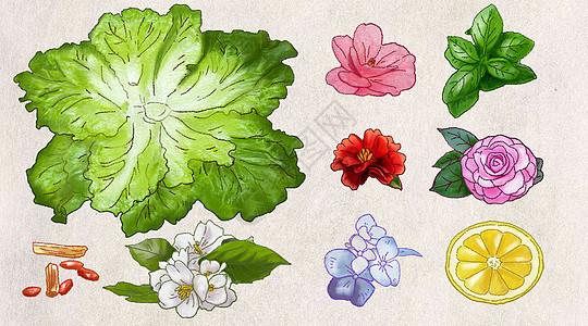 蔬菜花卉图片