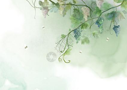 手绘水彩葡萄图片