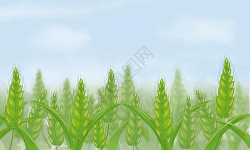 二十四节气小满麦穗主题图片