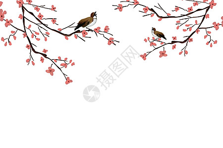 花鸟枝头简约背景图片