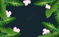 夏季热带植物背景图片