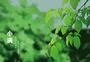 二十四节气小满绿色夏天主题图片