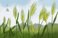 二十四节气小满麦穗图片