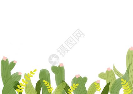 仙人掌背景图片
