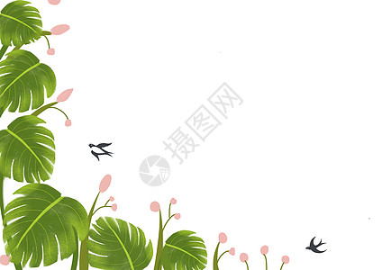 龟背竹植物背景图图片