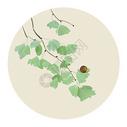 中国风树叶图片