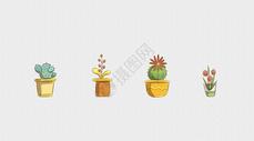 植物花卉盆景图片