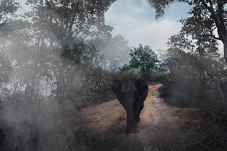 迷雾森林中的大象图片