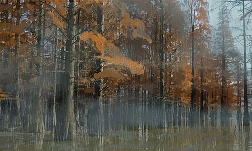 雨来的森林图片