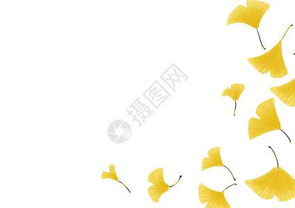 银杏留白背景图片