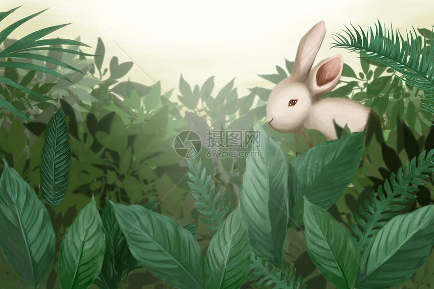 森林小兔子图片