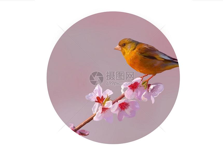 二十四节气之小满-鸟图片