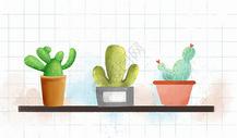 仙人掌盆栽图片