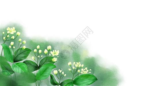 夏日茉莉花卉背景图片