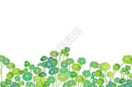 绿色铜钱草留白背景图片