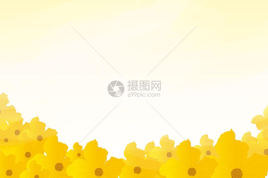 花卉banner背景图片