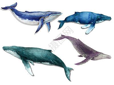 水彩手绘鲸鱼图片
