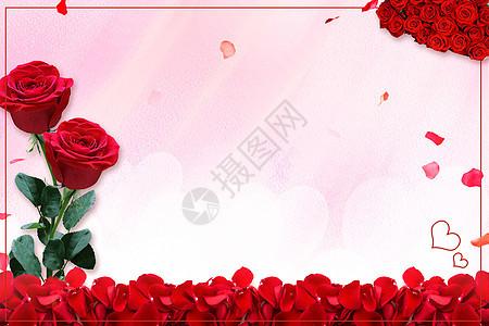 520玫瑰花背景图片