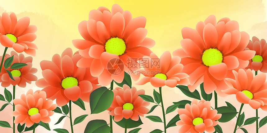 太阳花插图图片