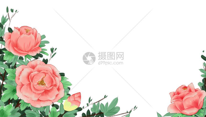 牡丹花留白背景图片