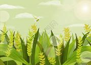 小满节气植物插画图片