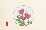 中国风工笔花卉罂粟图片