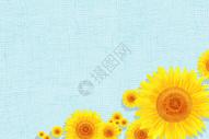 向日葵二分之一留白背景图片