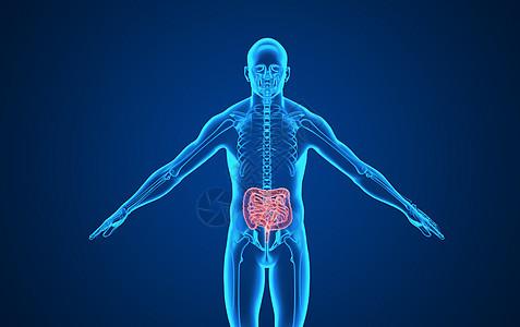 人体大肠背景图片