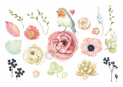 植物花卉鸟类背景素材图片