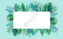 热带植物背景图片