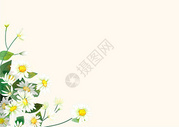 雏菊留白背景图片
