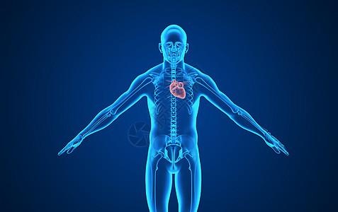 人体心脏背景图片