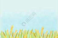 稻谷背景素材图片