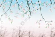 枝叶与花图片