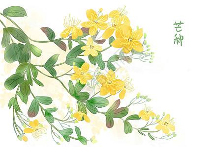 芒种花朵图片