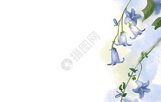 蓝色小花图片
