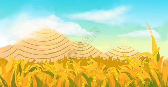 芒种麦田图片
