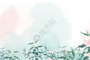 小清新花卉图片