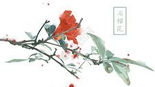 中国风手绘石榴花背景图片