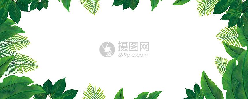 热带植物 植被 绿植 绿叶元素图片