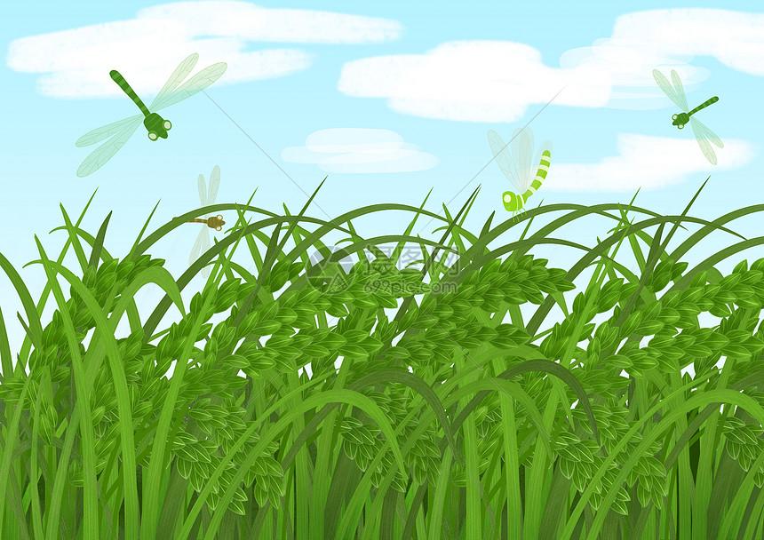 小清新水稻 夏季小满图片