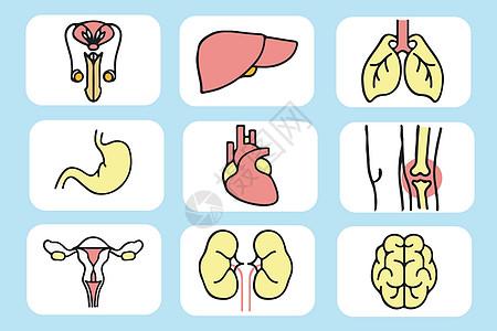 人体器官图片