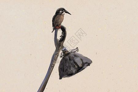 水墨莲与翠鸟图片
