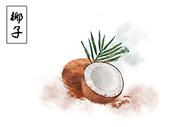 椰子水果插画图片