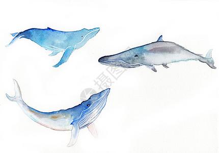 水彩手绘鲸鱼高清图片