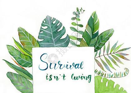 水彩手绘植物高清图片