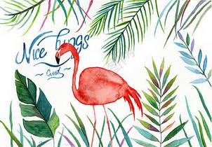水彩手绘植物火烈鸟图片